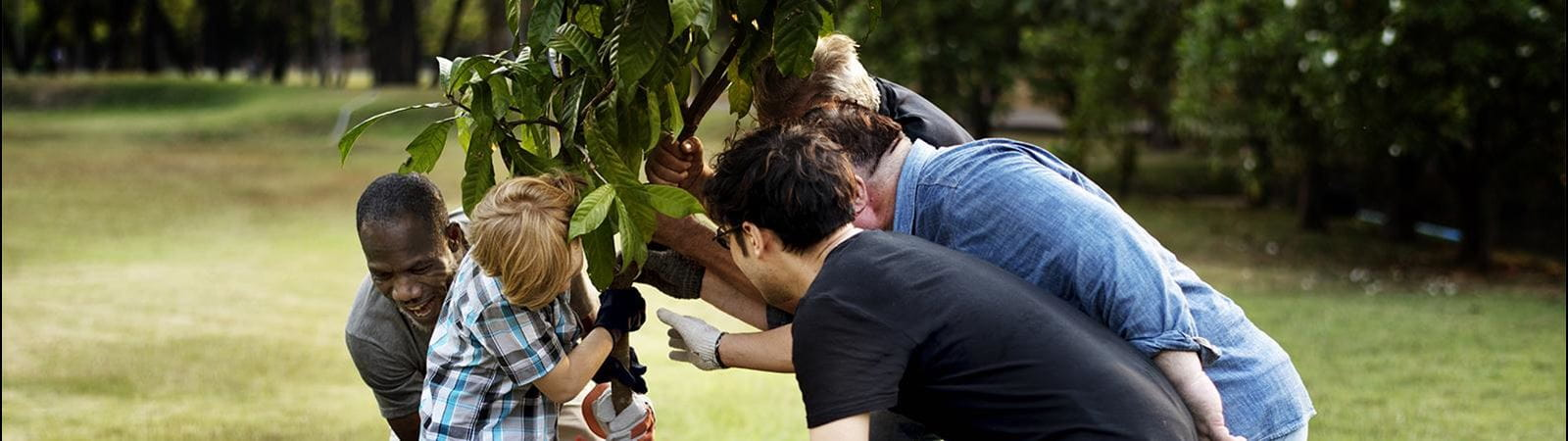 Community group planting a tree